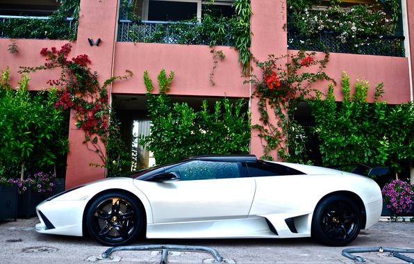 Картинка белый, Lamborghini, white, ламборджини, murcielago