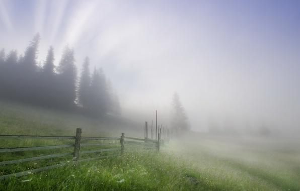 Картинка пейзаж, туман, забор