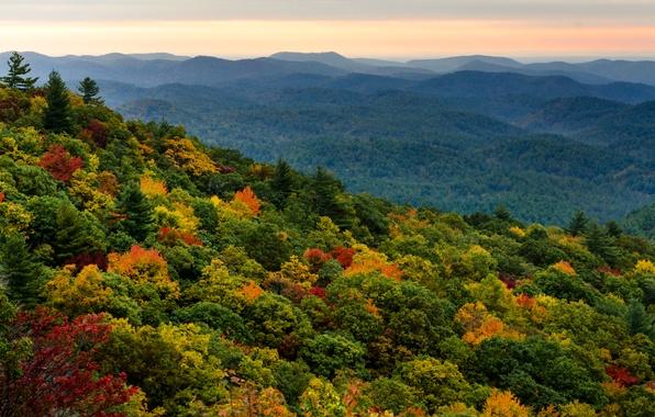 Картинка лес, небо, деревья, закат, оранжевый, холмы, вид, высота, вечер, Осень, дымка