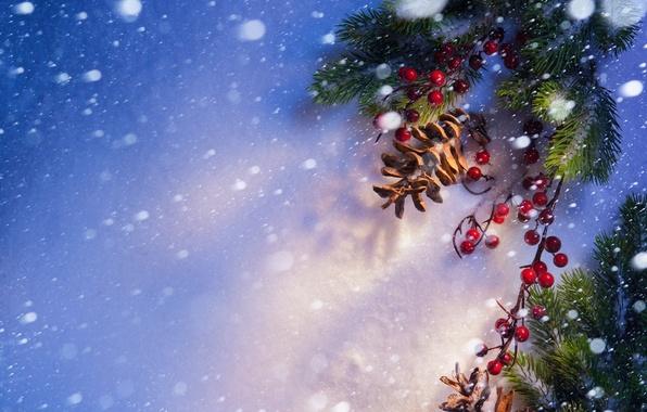 Картинка снег, ягоды, шишки