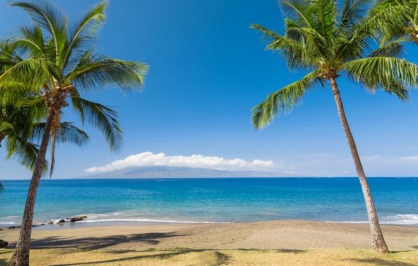 Картинка песок, море, пляж, небо, солнце, облака, тропики, пальмы, побережье, горизонт, Гавайи