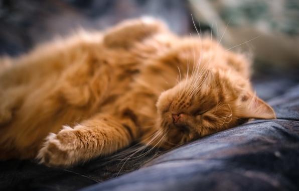 Картинка кот, усы, лапы, шерсть, рыжий, спит, лежит