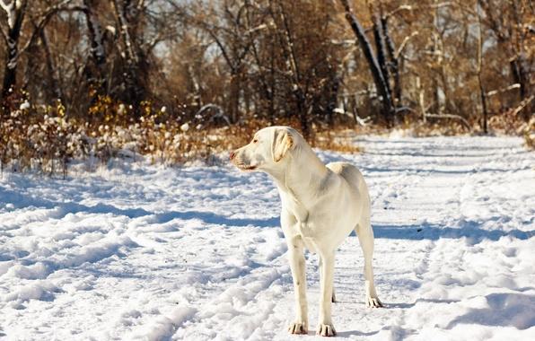 Картинка осень, снег, друг, собака