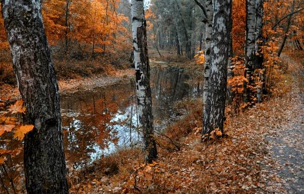 Картинка осень, листья, природа, пруд, парк, берёзы