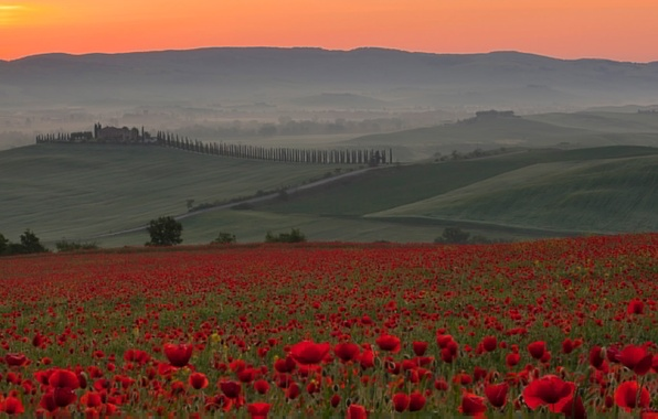 Картинка поле, небо, закат, цветы, туман, холмы, маки, Италия, Italia, Toscana, Siena, Crete Senesi