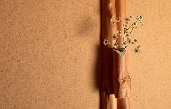 Картинка свет, цветы, стена, дерево, ромашки, букет, штукатурка