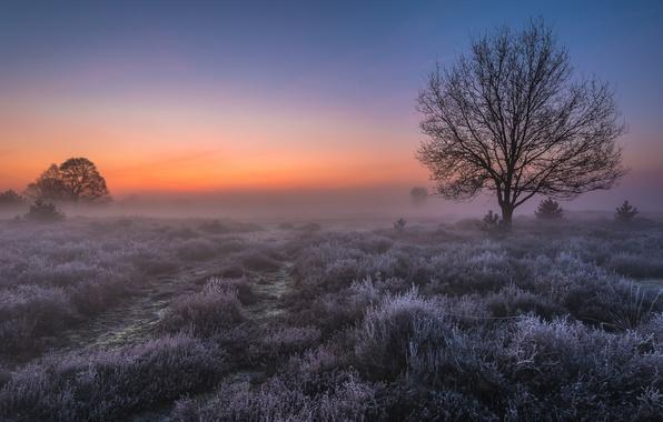 Картинка иней, поле, свет, туман, дерево, рассвет, утро, Нидерланды, Голландия, Сент-Антони