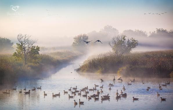 Картинка осень, туман, река, утки, утро, Октябрь