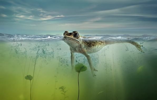 Картинка природа, пруд, лягушка
