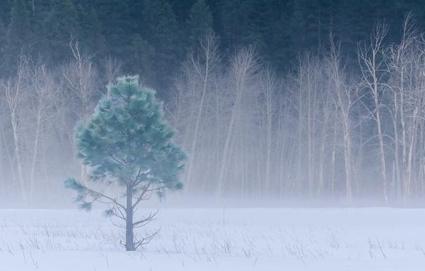 Картинка зима, лес, снег, деревья, туман, поляна, Калифорния, USA, США, Йосемити, forest, trees, California, winter, snow, …