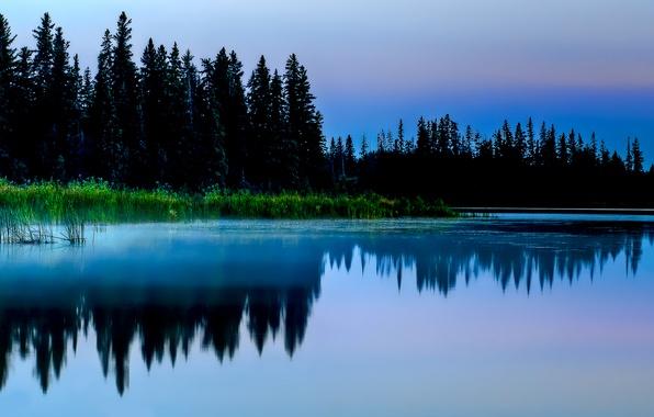 Картинка лес, трава, природа, озеро, пруд, отражение, заросли, болото, ель, вечер
