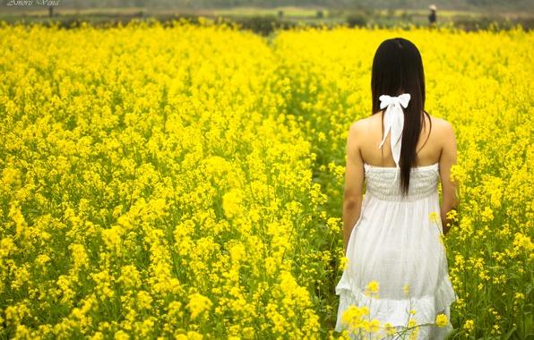 Картинка поле, белый, лето, девушка, солнце, цветы, желтый, фон, widescreen, обои, настроения, поля, платье, брюнетка, wallpaper, ...