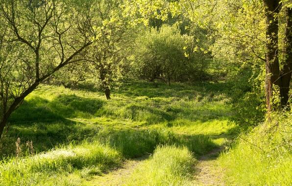 Картинка зелень, лес, лето, трава, солнце, деревья, Германия, Бавария, тропинка, Regenstauf