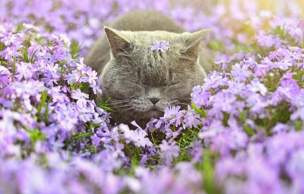 Картинка кот, цветы, сон