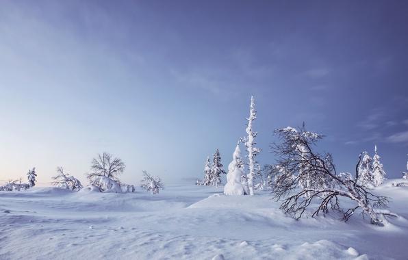 Картинка зима, снег, деревья, сугробы, Финляндия, Finland, Lapland, Лапландия