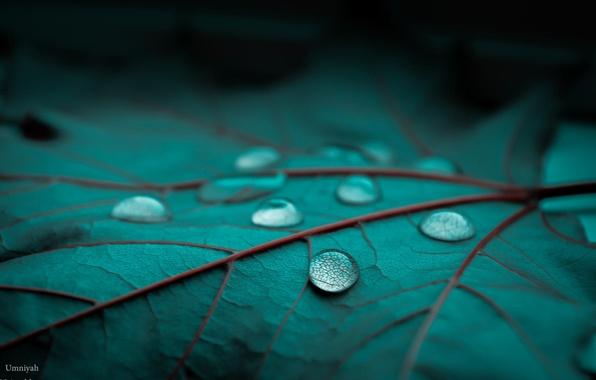 Картинка капли, макро, лист, зеленый, роса