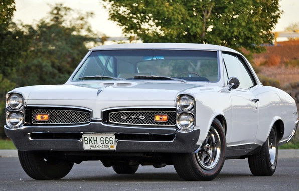 Картинка белый, дерево, мускул кар, классика, Coupe, Pontiac, GTO, 1967, передок, понтиак, Muscle car, Tempest, темпест, …