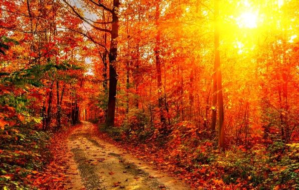 Картинка дорога, осень, лес, листья, солнце, лучи, деревья, закат