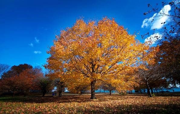 Картинка осень, парк, Чикаго, набережная
