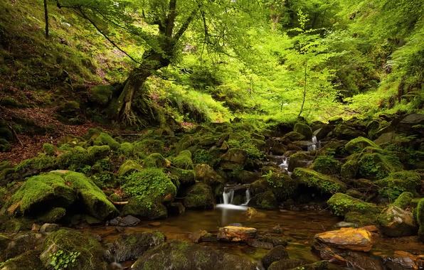 Картинка лес, лето, деревья, природа, ручей, камни, мох, тень
