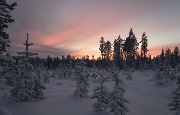 Фото обои снег, зима, Финляндия, деревья, Лапландия, лес, закат