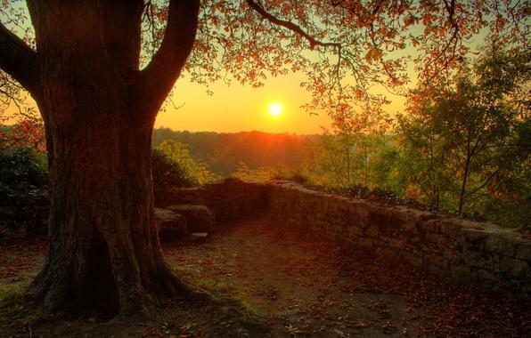 Картинка солнце, природа, дерево, настроение