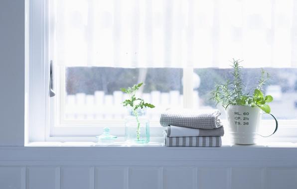 Картинка цветы, комната, интерьер, полотенце, растения, окно, квартира