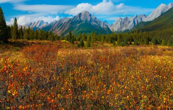 Картинка осень, лес, небо, трава, листья, деревья, горы, луг, канада, canada, alberta, banff national park