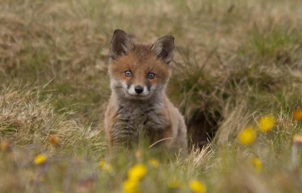 Стихи про лис лису лисицу лиса лисенка