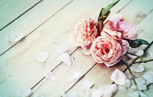 Картинка цветы, розы, лепестки, flowers, petals, roses