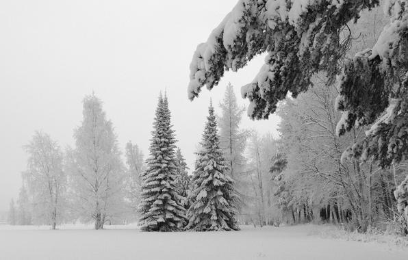 Картинка холод, зима, снег, деревья, природа, фото, дерево, пейзажи, елки, ель, ели, мороз, ёлки