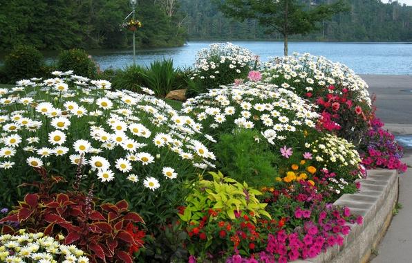 Картинка деревья, пейзаж, цветы, природа, река, ромашки, фонарь, клумба, набережная, петунья, цинии, колеус