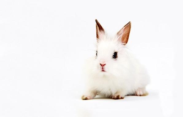 Картинка белый, фон, кролик, уши