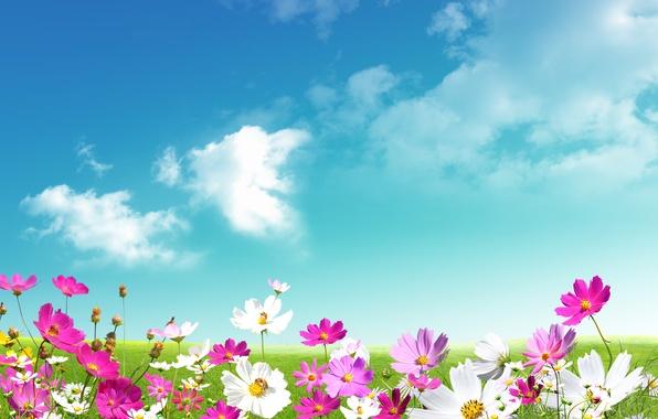 Картинка небо, трава, листья, облака, цветы, свежесть, green, ромашки, красота, весна, луг, розовые, white, grass, белые, …