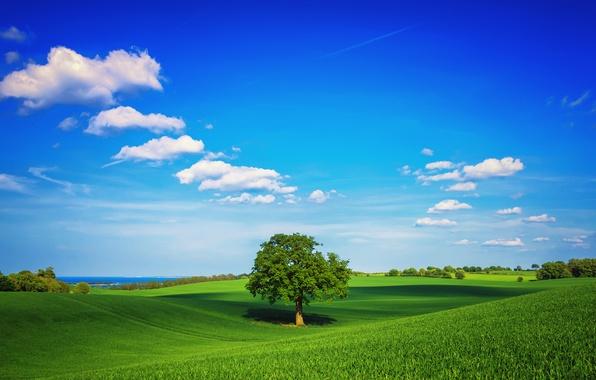 Картинка зелень, поле, небо, трава, облака, дерево, весна