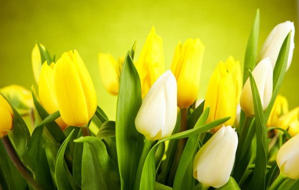 Картинка листья, цветы, желтые, тюльпаны, white, белые, бутоны, yellow, flowers, leaves, tulips, buds