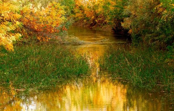Картинка осень, трава, листья, вода, деревья, природа, пруд, nature, water