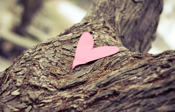 Картинка макро, бумага, фон, дерево, widescreen, обои, настроения, сердце, размытие, wallpaper, кора, сердечко, широкоформатные, background, полноэкранные, …