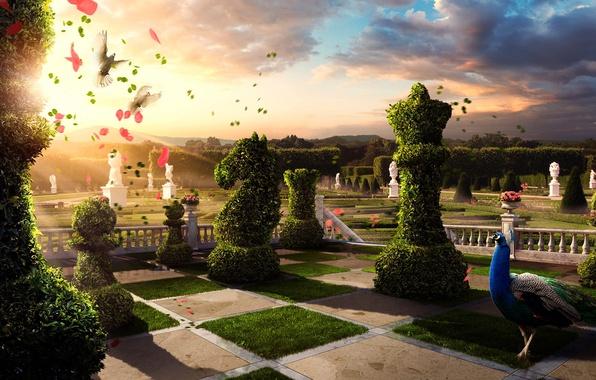 Картинка лето, солнце, цветы, птицы, природа, растения, необычное, сад, шахматы, голуби, павлин, клумбы