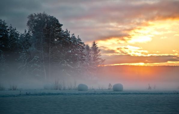 Картинка зима, снег, деревья, закат, туман, Швеция, северная