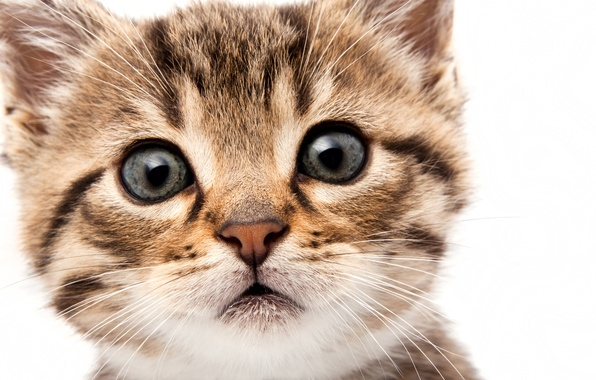 Картинка кошка, глаза, кот, взгляд, морда, котенок, мордочка