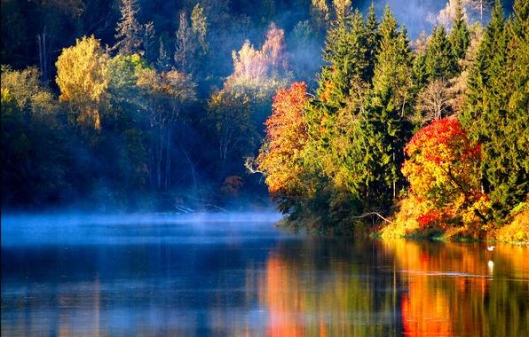 Картинка осень, лес, туман, река, птица, утро, Latvian autumn