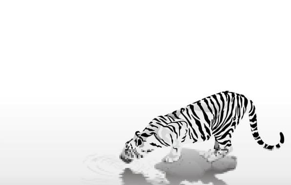 Фото обои животные, black & white, черно-белый, осторожность, жажда, простота, тигр, полоски