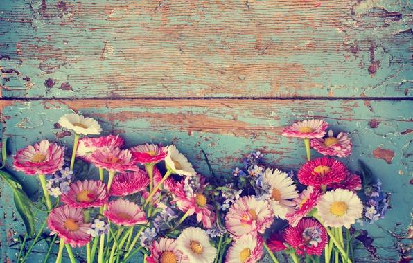 Картинка цветы, ромашки, flowers, полевые цветы, фиалки, маргаритки, chamomile, wild flowers, daisies violets