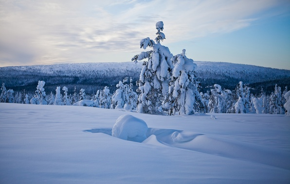 Картинка зима, лес, снег, деревья, панорама, сугробы, Финляндия, Finland, Lapland, Лапландия