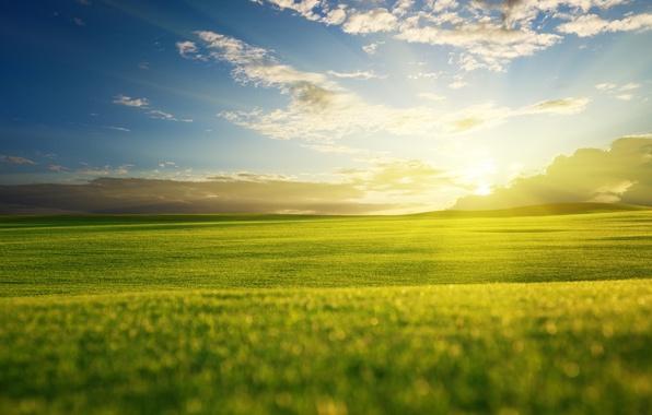 Картинка зелень, поле, небо, трава, солнце, облака, лучи, свет, природа, зеленый, холмы, пейзажи, вид, поля, вечер, …
