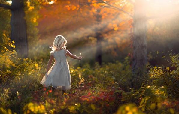 Картинка осень, лес, природа, одуванчик, девочка