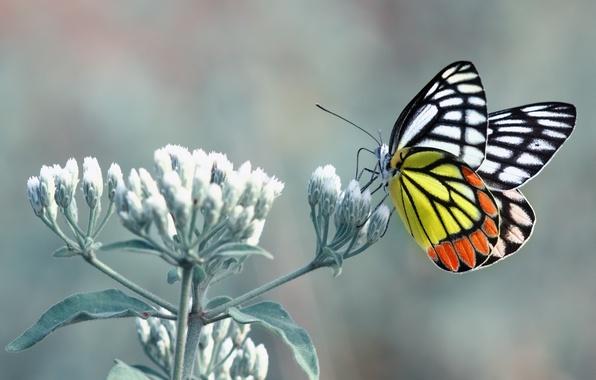 Картинка Orange, Flower, Black, White, Yellow, Butterfly, Leaves, Stalk, Paws, Fell, Antennae