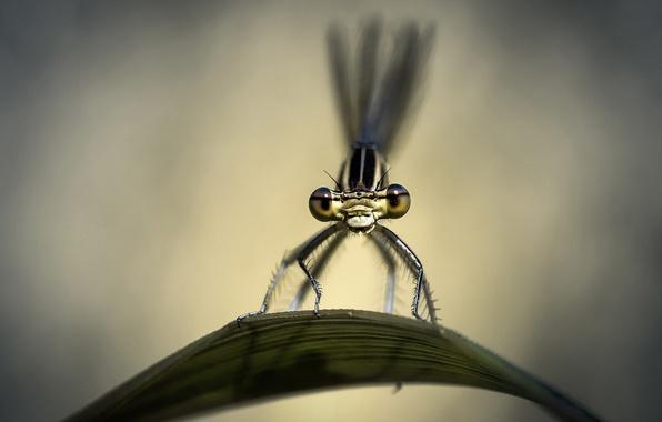 Картинка макро, лист, стрекоза, насекомое