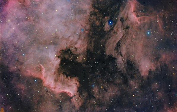 Фото обои Северная Америка, Пеликан, космос, туманности